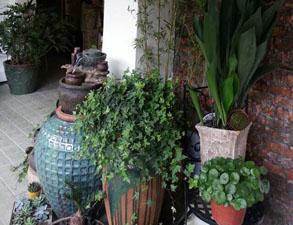 花艺师常用的叶材