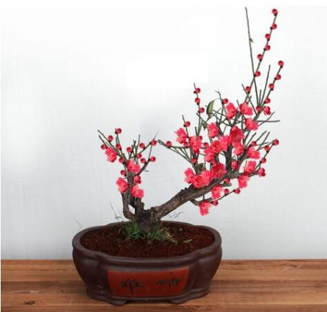 花卉植物造型